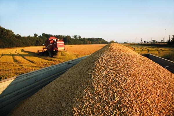 cereali ucraini