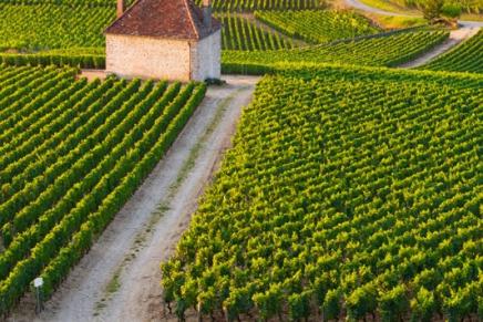 I vini del Consorzio Collio conquistano la Docg
