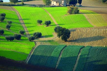 Greening ok con il 75% dei terreni a riposo
