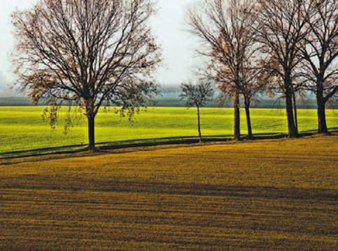 banca terre agricole