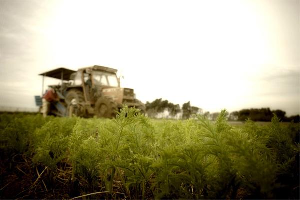 trattore_verde.jpg