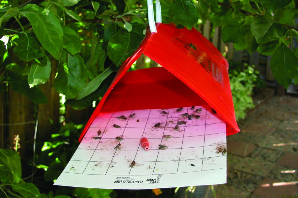 trappola di monitoraggio
