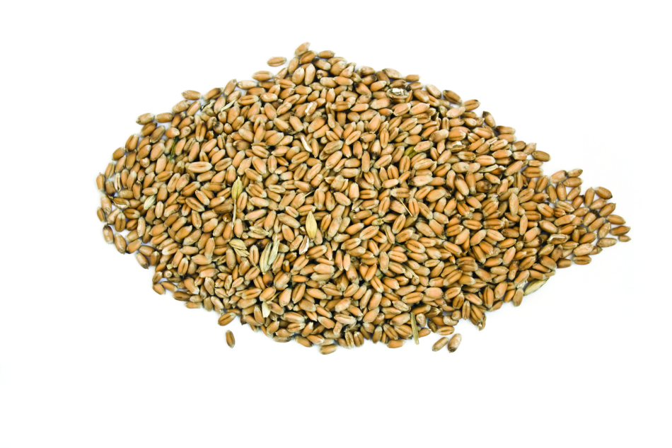 Bunch of wheat seeds