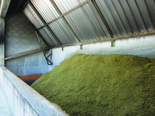 Bunker coperto da l'insilato di mais viene miscelato al liquame bovino.