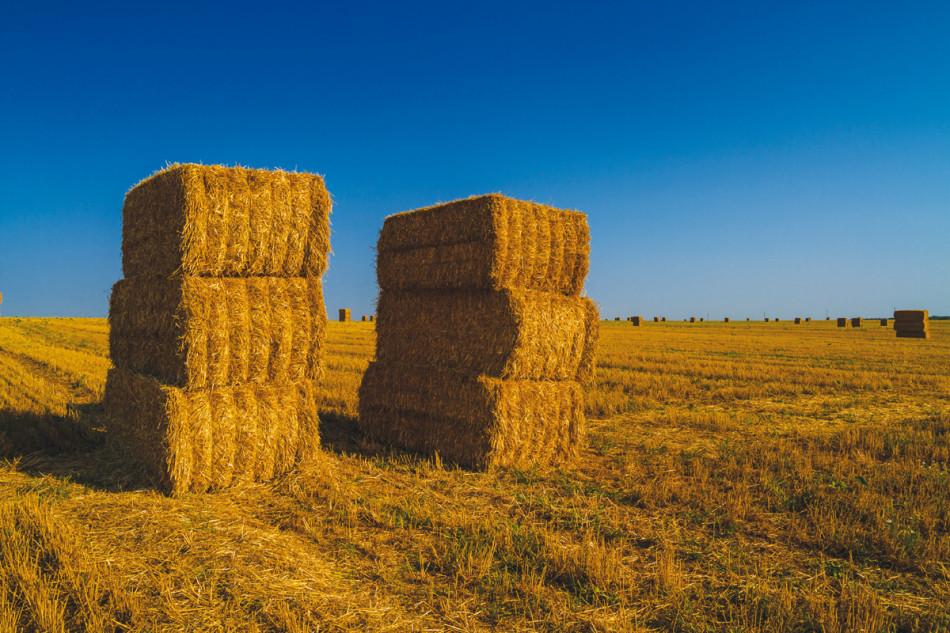 Hay Bales on wheat field