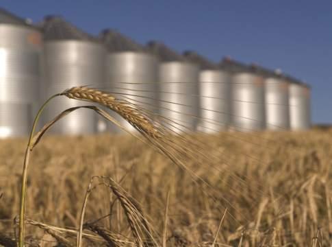 prezzi grano