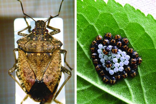 insetti alieni