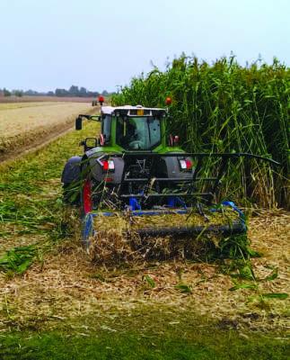 WS 320 BIO durante le operazioni di trinciatura e andanatura del sorgo da biomassa, a fine campo.