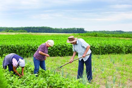 """L'importanza del """"mandato"""" fra agricoltore e Caa"""