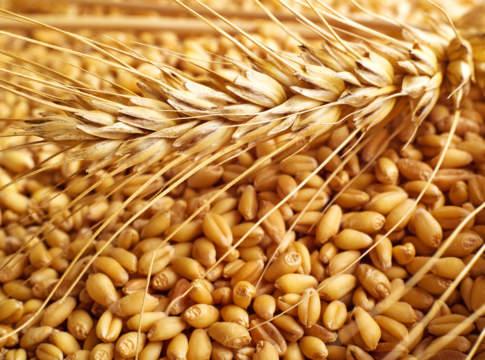 prezzi del grano