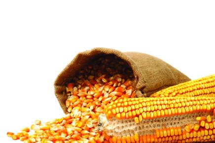 I prezzi nazionali e mondiali dei cereali (18 maggio)