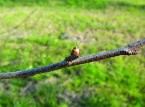 Difesa terra e vita - Cimice del pomodoro ...