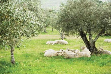 Il punto sul Psr 2014-2020 in Basilicata