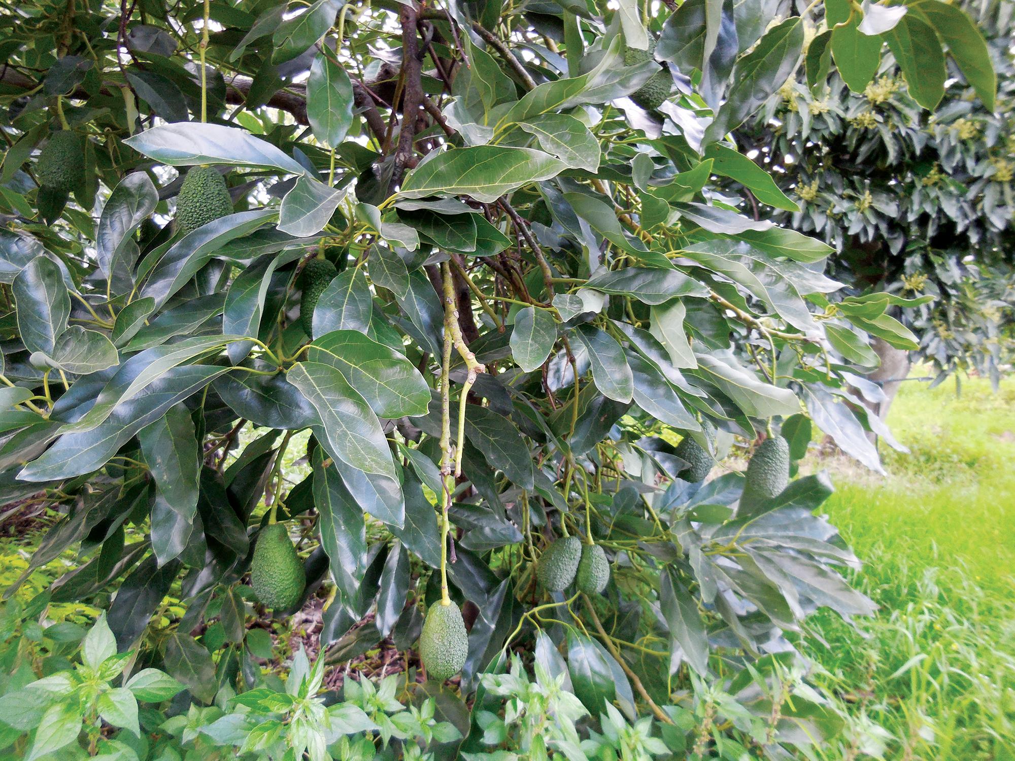Vivaio Forestale Sicilia : Orto botanico piante officinali siciliane