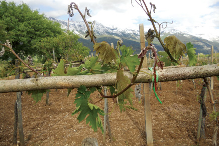 In Emilia-Romagna autorizzati 520 ettari a vigneto
