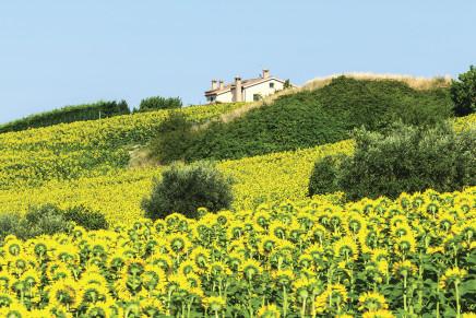 La prelazione agraria e gli eredi del coltivatore diretto