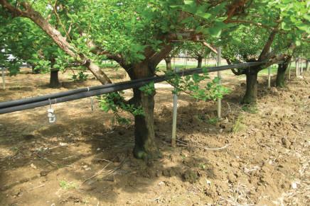 Acqua per l'agricoltura, una sfida tecnologica