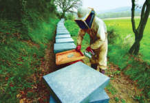 salvaguradia delle api