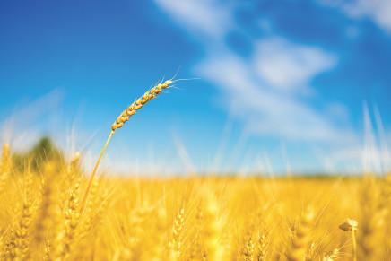 Quali eventi potrebbero cambiare il mercato cereali?