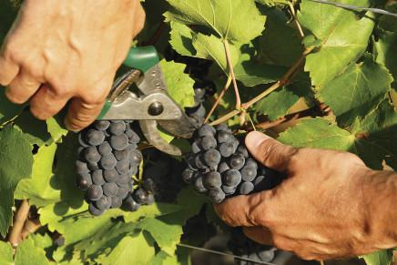Cooperative e consorzi agricoli, siglato il nuovo contratto