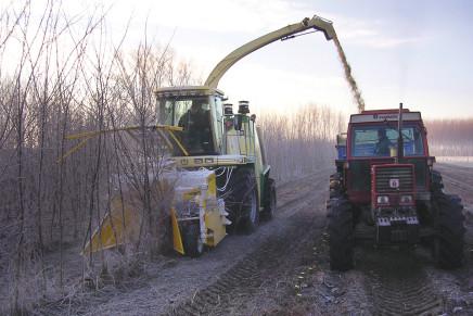 Robinia da biomassa, la gestione in ambiente agricolo