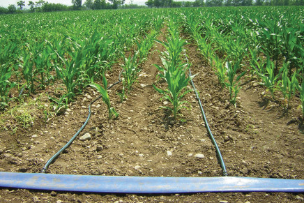Dalla microirrigazione alla fertirrigazione del mais