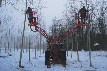 Una normativa aggiornata per rilanciare la pioppicoltura