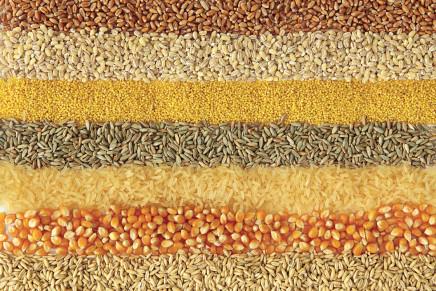 Le strategie per le imprese cerealicole italiane