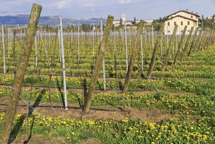 Tutte le dichiarazioni vitivinicole entro il 15 dicembre