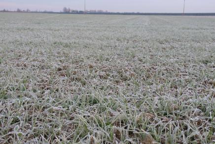 Interventi di arricchimento nel periodo invernale