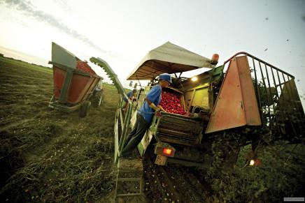 Inizia dalla coltivazione il lavoro di Conserve Italia