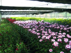 ortoflorovivaismo e florovivaisti