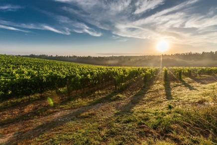 In vigore il Testo Unico del vino, burocrazia dimezzata