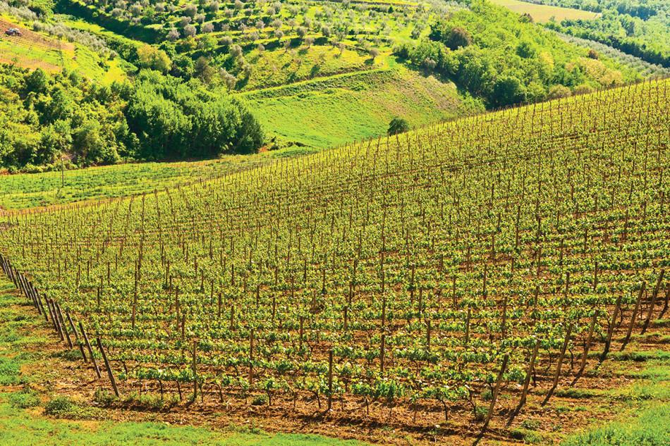 viticoli