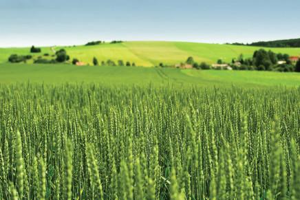 Cereali, possibile una lieve ripresa dei prezzi mondiali