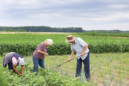 """Unioni civili e convivenza entrano nella """"famiglia agricola"""""""