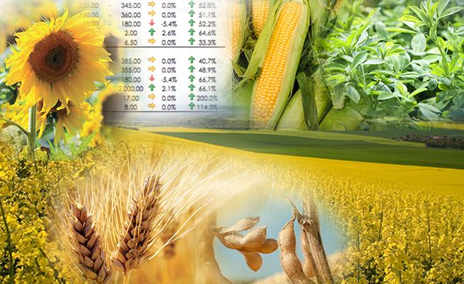prezzi dei cereali terra e vita