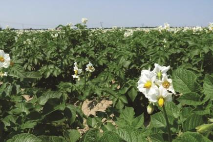Spandiconcime o fertirrigazione, seguiamo le piante