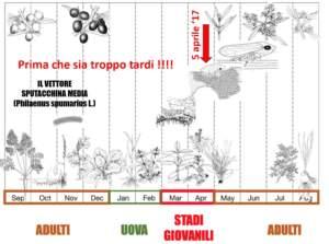 Il ciclo biologico del vettore