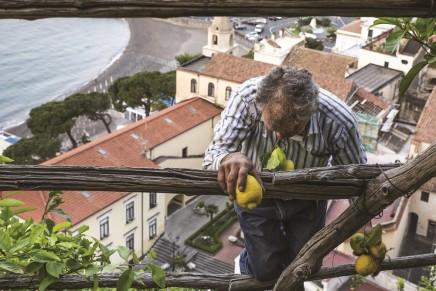 Una vita all'ombra dei limoni sfusati