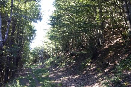 Toscana, aiuti per gli ecosistemi forestali