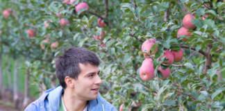 Prevedere Il clima e prevenire le malattie delle piante