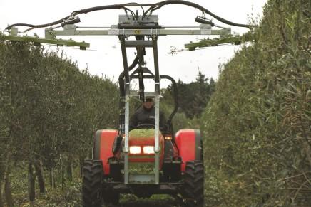Oliveti, con l'alta densità la potatura è meccanica