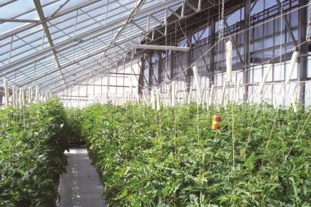 Una serra fotovoltaica che non ombreggia le colture