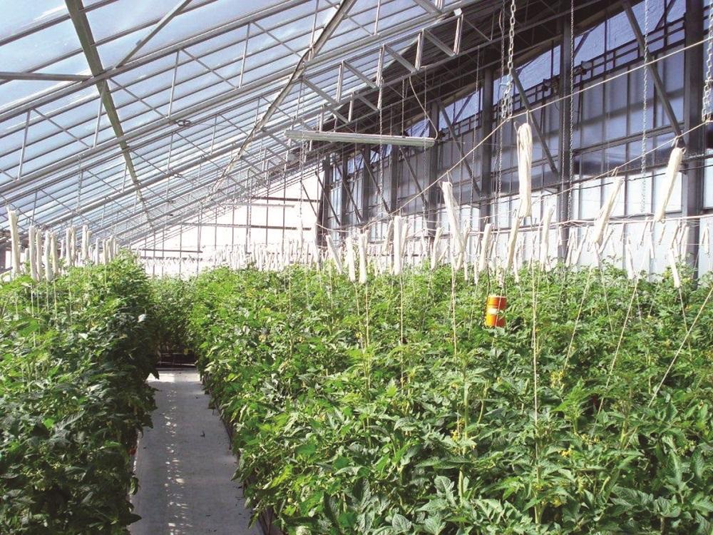 Una serra fotovoltaica che non ombreggia le colture for Irrigazione serra