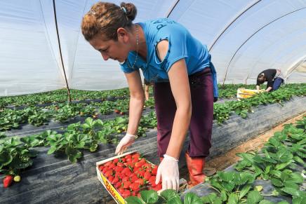 Apprendisti in agricoltura, ok all'integrazione salariale