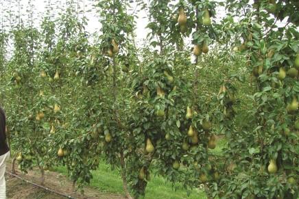 Tecnologia e digitale, da qua passa il futuro della frutticoltura