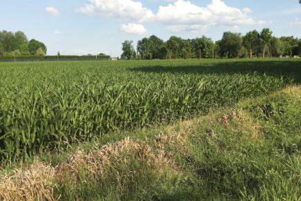 Cd e Iap, redditi terreni fuori dall'imponibile