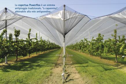 Ciliegio: coperture contro insetti, pioggia e grandine
