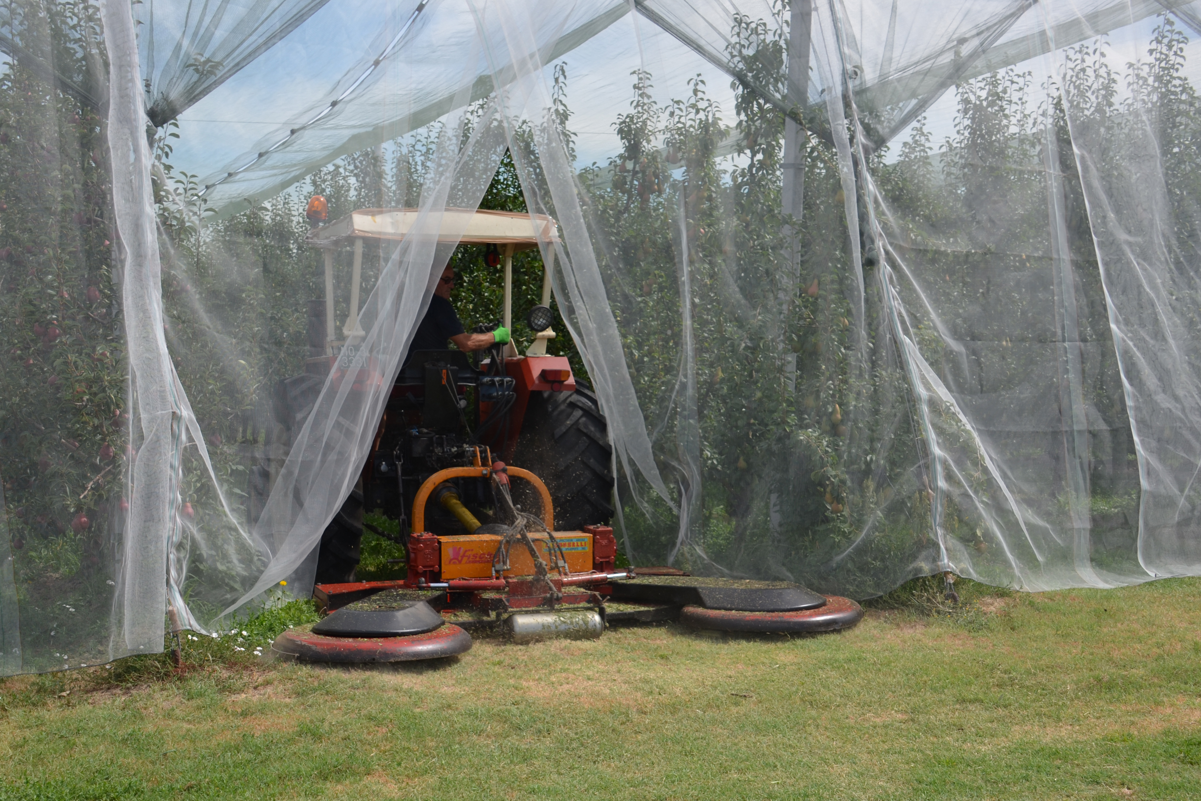 Cimice asiatica reti anti insetto a confronto terra e vita for Cimice insetto